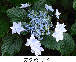 20120721_1.jpg